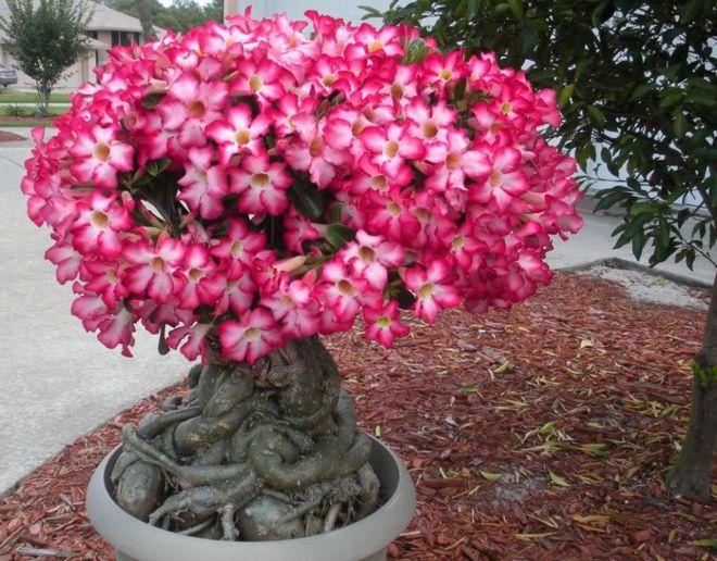 Топ 10 домашних цветов, которые нас убивают. Никогда не держите дома эти цветы!